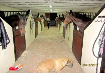 Horse Stables at Chartwell North Estates
